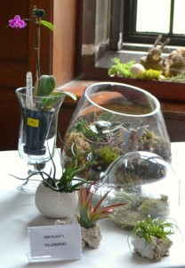 April - Air terrariums