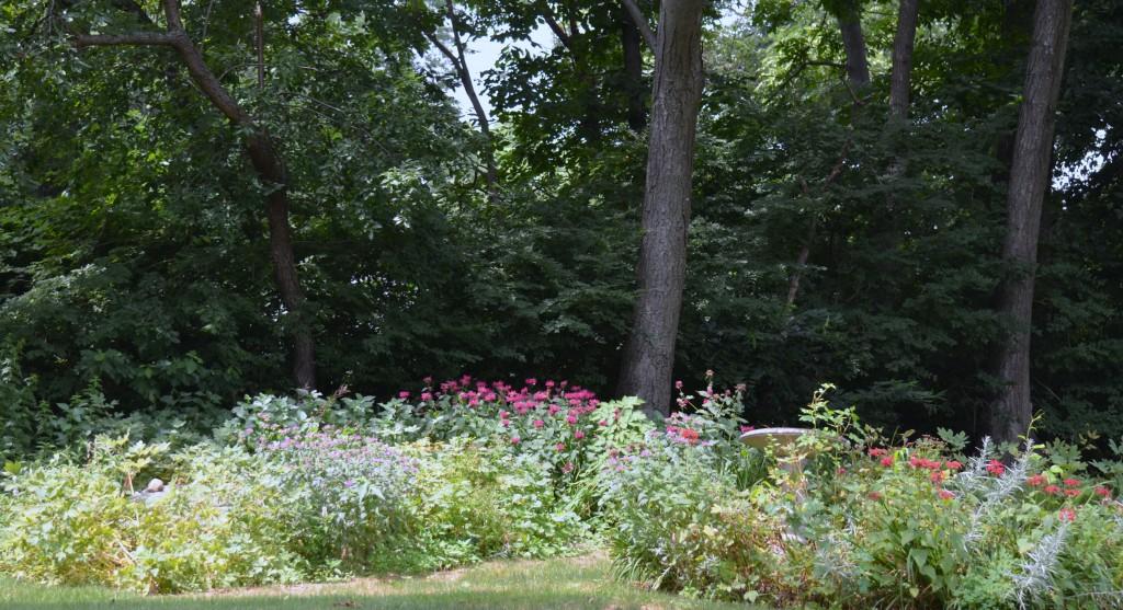 Gaye's garden (2)