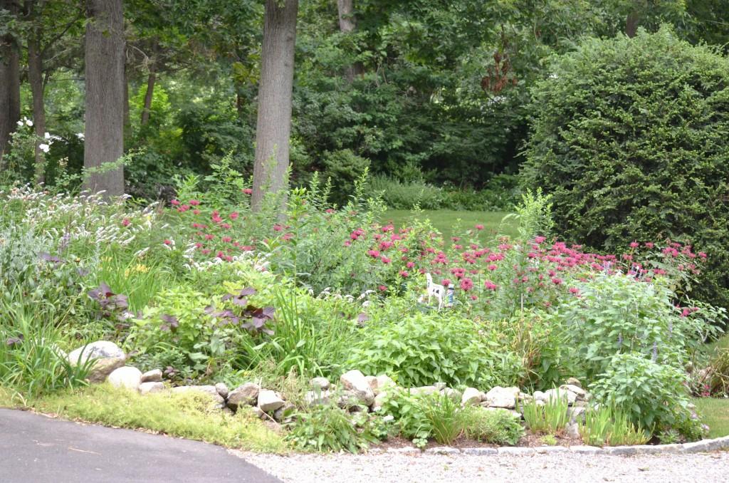 Gaye's garden (1)