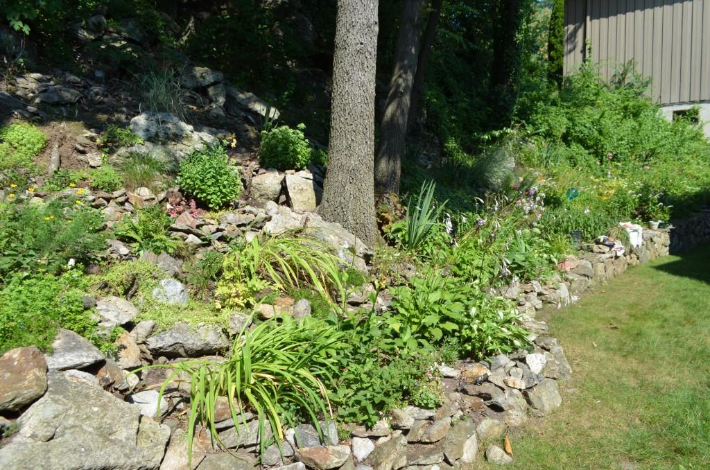 Jackie's garden (1)